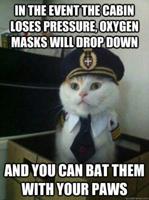 Captain Kitty Meme On Some Misguided Airplane Oxygen Mask Instructions captain kitty meme on some misguided airplane oxygen mask instructions,Funny Airplane Meme Oxgen Mask