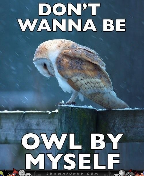 Sad Owl Meme Feels The Loneliness Of A Cold Night