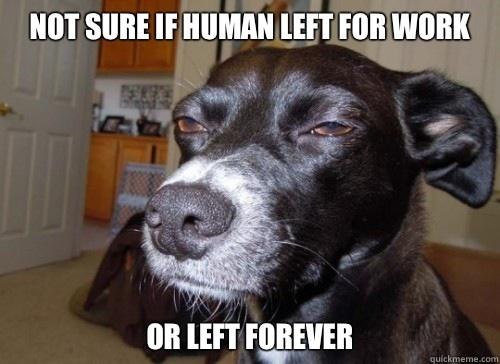Dog Wonders If Human Left For Work Or Left Forever Meme dog wonders if human left for work or left forever meme