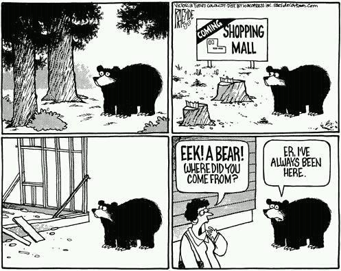 tukaj je tudi medved kriv, da je blizu trgovine