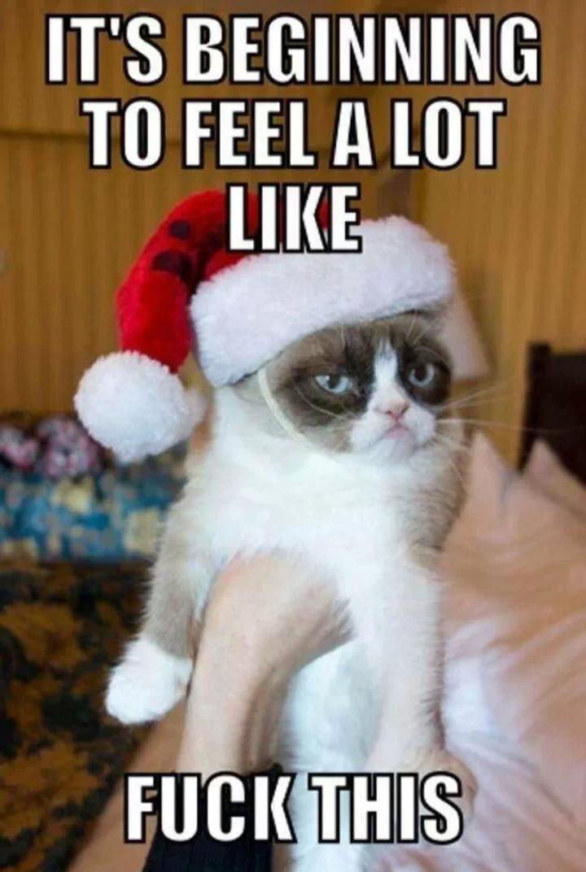 Grumpy  Cat  Tard  Is  Not  Feeling  The  Christmas  Spirit  Meme