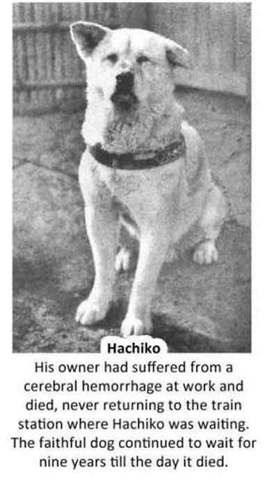 Hachiko Waited For His Owner To Return To The Train Station For 9 Heartbreaking Years