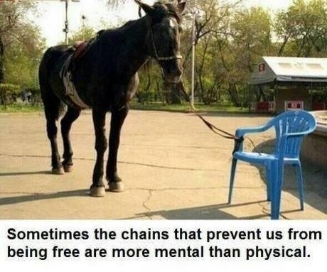 Stupendous Horse Tied To A Small Chair Thinks It Cant Walk Around Ibusinesslaw Wood Chair Design Ideas Ibusinesslaworg