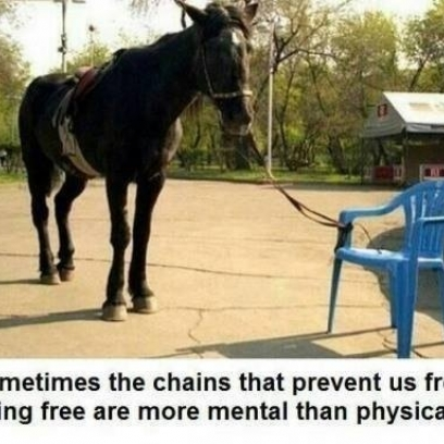 Enjoyable Horse Tied To A Small Chair Thinks It Cant Walk Around Ibusinesslaw Wood Chair Design Ideas Ibusinesslaworg