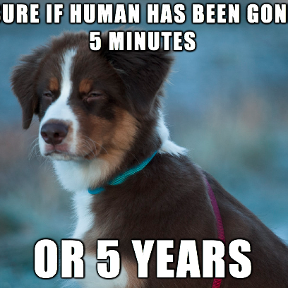 Not Sure Dog Meme Is All Out Of Time_408x408 not sure dog meme is all out of time