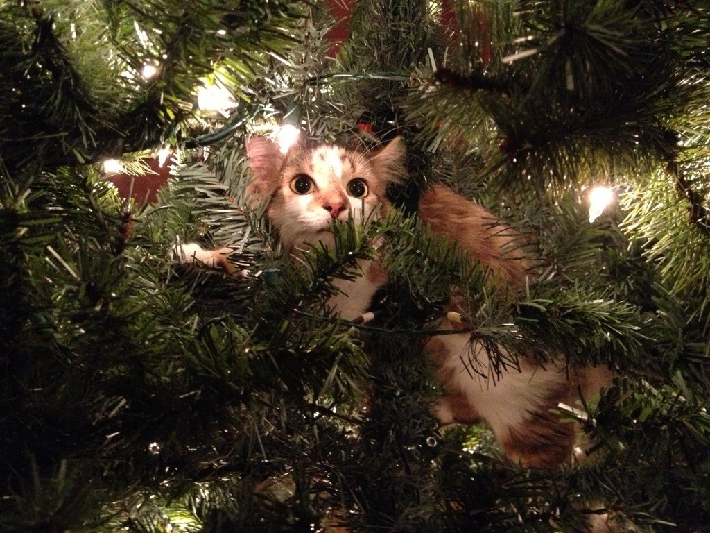 Cat Was Drawn To Being Trapped By The Christmas Lights