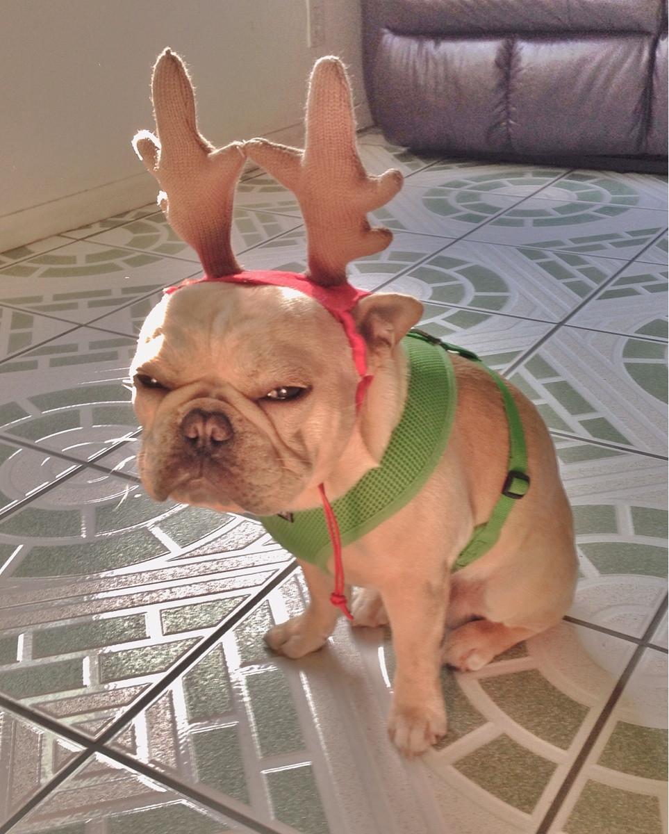 grinch christmas dog