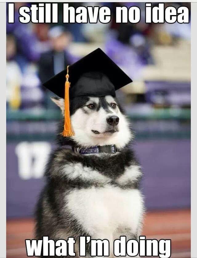 Husky Dog Memes Funny Husky Dog Meme Funny Dog