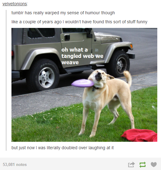 Doge Goes Into Inner Monologue Mode As a Frisbee Makes Him Question his Life Choices doge goes into inner monologue mode as a frisbee makes him question