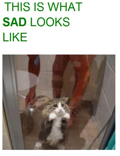 The Face Of Pure Sadness Cat Meme